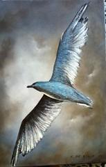 gabbiano  meraviglia (pupatticantropa) Tags: gabbiano libertà gabbianojonathanlivingston cielo volo volare nuvole