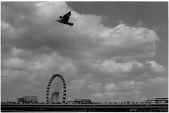 Scheveningen appear (Elios.k) Tags: horizontal outdoors people many distance tourists visitors pier scheveningen jetty walk walking bird inflight focus dof depthoffield focusonforeground ferriswheel depier sky cloud cloudy weather seagull blackandwhite bw mono monochrome travel travelling may 2018 canon camera photography denhaag hague netherlands nederland europe film analoguephotography scannedfilm kodaktrix400 analogfilm grain contrast canona1 a1 analogcamera