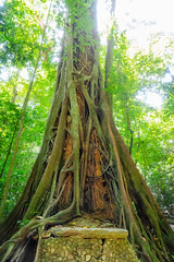 2019 Raising for light (jeho75) Tags: sony ilce 7m2 zeiss mesoamerica mexico palenque rainforest tree jungle nature