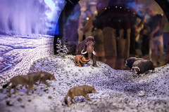 Smithsonian - David H. Koch Hall of Fossils (dckellyphoto) Tags: smithsonian diorama mammoths davidhkochhall museum washingtondc districtofcolumbia 2019 canoneos6dmarkii 6dmarkii usa