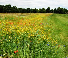 Wildflowers In Syon Park - London. (Jim Linwood) Tags: flowers syonpark brentford london england