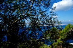 2019-05-29 - Gibraltar (50) (aknad0) Tags: gibraltar krajobraz morze drzewa
