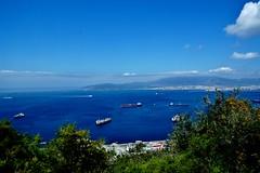 2019-05-29 - Gibraltar (52) (aknad0) Tags: gibraltar krajobraz morze drzewa