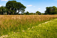 Off Pitch (davidheath01) Tags: amateur amateurphotographer amateurphotography abandoned aperture art beauty beautiful colour color colours contrast depthoffield dslr digital england englishforest essex english forest field flowers flower grass green ingatestone landscape landscapephotography light open outside old picture photography photograph photographer panasonic travels uk sun summer vacation village vintage wood weather lx100 football soccer goal goals goalposts premier pitch league