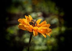 2_1 (KRR_3) Tags: dof bokeh flowers sel50f18 nex a6000 sony