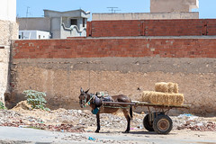 _MG_0542 (Artodox) Tags: тунис tunisia tunesien sousse сусс