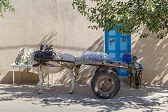 _MG_0476 (Artodox) Tags: тунис tunisia tunesien sousse сусс