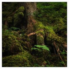 woodland spirits (B. Blue) Tags: grün moos pflanzen österreich wald natur material holz steiermark austria moss nature styria wood schladming