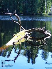 Lake Iso-Ahvenisto (PeepeT) Tags: luonto luontokuvaus naturephotography suomenluonto lake järvi isoahvenisto ylöjärvi finnishnature summer kesä