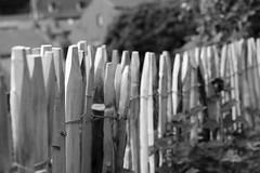 Terrasses des Minimes (Liège 2019) (LiveFromLiege) Tags: liège luik wallonie belgique architecture liege lüttich liegi lieja belgium europe city visitezliège visitliege urban belgien belgie belgio リエージュ льеж noir et blanc noietblanc noirblanc blackwhite blackandwhite bnw bw black white bllackwhite whiteblack blackandwhitephotography nb 50mm noiretblanc