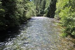 The McKenzie River, on its way to meet the Willamette (rozoneill) Tags: mckenzie river national recreation trail bridge deer scott boulder willamette forest belknap springs oregon hiking creek