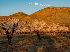 sessió trenc d'ametler 17 (.carleS) Tags: trenc dalba olympus omd em5 ii ametlers benissa sol sun sunrise almond tree