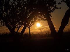 sessió trenc d'ametler 14 (.carleS) Tags: trenc dalba olympus omd em5 ii ametlers benissa sol sun sunrise almond tree