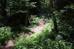 Trail through a sun spot (rozoneill) Tags: mckenzie river national recreation trail bridge deer scott boulder willamette forest belknap springs oregon hiking creek