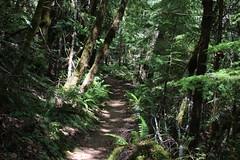 Trail up in the forest (rozoneill) Tags: mckenzie river national recreation trail bridge deer scott boulder willamette forest belknap springs oregon hiking creek