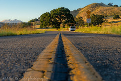 On the Road (borders92109) Tags: figueroa los olivos california oak tree road flowers wildflowers sony a7ii tamron 2875 f28