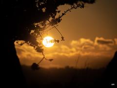 sessió trenc d'ametler 8 (.carleS) Tags: trenc dalba olympus omd em5 ii ametlers benissa sol sun sunrise almond tree