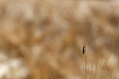 un insecte (Glc PHOTOs) Tags: glc1580dxo