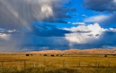 Somewhere in Utah (ValterB) Tags: blue light shadow sky usa cloud color colour colors lines clouds landscape view scenic roadtrip 2012 nikond90 valterb road sunlight field grass rain animal cow cowboy cows