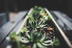 25/52 - DIY Plants (Mark Somerville.) Tags: mark somerville 52 week 25 burlington project canon 35 14l diy box planter