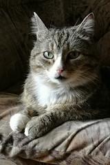 (katlamsib) Tags: cats mobilephotography huawei honor9