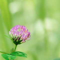 P6050160 (omj11) Tags: 60mm fleurs insecte macro carré pastel olympus zuiko