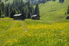 val di funes (clabattis) Tags: funes valdifunes villnoss odle dolomiti sudtirol