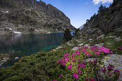 Lago del Pirineo (JavierQueralt) Tags: 2019 agua azul catalunya color d7100 dx españa javiermartinezqueralt lanscape naturaleza nikon piedra refugiodeamitges sigma1020 tamron175028