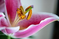 Flowers (chris_m03) Tags: