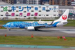 "JAPAN TRANSOCEAN AIR B737-800(WL) JA05RK ""Jinbei Jet"" 003 (A.S. Kevin N.V.M.M. Chung) Tags: aviation aircraft aeroplane airport airlines apron plane spotting fukuoka fuk boeing b737 b737800wl speciallivery jta runway takeoff"