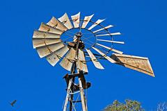 Windmill Eagle (jhhwild) Tags: windmill eagle wind mill flying bird avian small old rusty metal farm