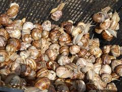 Snails on sale  in Split (dramadiva1) Tags: