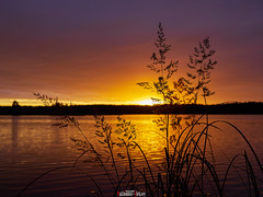 Sunset on the Volga River (zaxarou77) Tags: sunset volga river gx8 20mm f17 landscape orange purple nature color russia plants water clouds sun boke