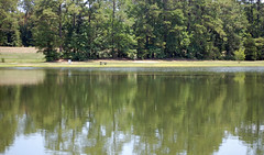 Reflection In The Water. (dccradio) Tags: park summer outside outdoors nc afternoon outdoor weekend saturday northcarolina summertime citypark lumberton saturdayafternoon goodafternoon robesoncounty lutherbrittpark trees lake reflection tree water grass yard pond nikon branch branches lawn foliage greenery dslr treebranches treebranch waterreflection treelimbs treelimb d40 bodyofwater