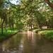 Corridor of trees between a river - Corredor de árvores entre um rio