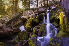 sequoia national park (Vic Fine Art Photography) Tags: sequoia national park sunset river rural reflection clouds canon colors canon1dx coast beauty birds mountains moon landscape lake forest flickriosapp:filter=nofilter falls field flowers travel trees outdoor photooftheday water wild wow explore