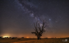 Arde Malacuera (JoseQ.) Tags: arbol luces noche sony guadalajara colores cielo estrellas nocturna oscuridad ramas 1635 linternas contaminacionluminica vialactea milkway