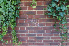 27th June 2019 (themostinept) Tags: chalk fivebargate wall brickwall leaves plants london hackney n16 albionroad stokenewington counting six 6