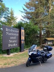 Redwood National and State Park (kepibear) Tags: redwoodnationalpark trophy motorcycle usa ca california 2019 unitedstatesofamerica trophyse state triumph iphonexsbackdualcamera425mmf18