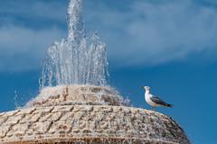 Rome 2019 (kruijffjes) Tags: italy rome st italië basilica peters stpetersbasilica stpietersbasiliek