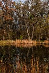 141115_Auwiesen_003 (Rainer Spath) Tags: österreich austria autriche steiermark styria mur graz liebenau auwiesen muraltarmthondorf herbst autumn