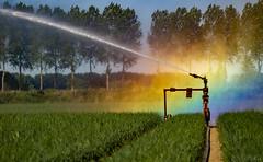 Oudelande (Omroep Zeeland) Tags: beregening uienveld uienteelt droogte oudelande akkerbouw sproeiinstallatie