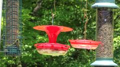 Tilted Feeders (blazer8696) Tags: 2019 brookfield ct connecticut ecw hdr img043567smooth2 obtusehill t2019 tabledeck usa unitedstates bird feeder feeders hummingbird