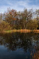141115_Auwiesen_007 (Rainer Spath) Tags: österreich austria autriche steiermark styria mur graz liebenau auwiesen muraltarmthondorf herbst autumn