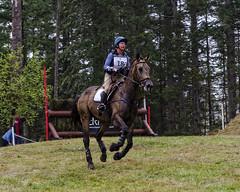 S02_LouiseWhitehead_Adventure (wildcatlou) Tags: olympiacameraclub scavengerhunt outdoors washington aspenfarms eventing horse rain horseandrider september autumn