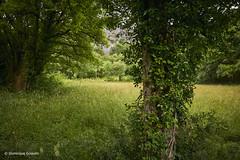 Vallée du Vers 5 (domingo4640) Tags: lot vers valleeduvers loxia loxia21 loxia2821 paysage paysagebuccolique arbre departementdulot tourismelot