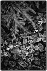 IN THE GARDEN OF THE GOOD AND EVIL (AEON VON ZARK) Tags: aeonvonzark arts angles abstract bienne beauty bw black city day detail everyday expressionism freedom fullframe frame fine fatale garden plants noiretblanc natural suisse shooting sun summer sensual sexy structure snapshot timeless trip town photographie photography photo photographe project photographer flowers zark