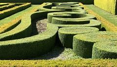 Hedge art (Sarah A Christie) Tags: swirls shapes nationaltrustforscotland aberdeenshire pitmeddengardens privet hedge