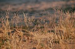 2019.06.23 Leica R5 + Vario Elmar 80-200mm fresh film 04-2020 Fujicolor C200 Lithuania (37) (nefotografas) Tags: 20190623 leicar5 varioelmar80200mm freshfilm 042020 fujicolorc200 lithuania