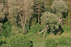 2019.06.23 Leica R5 + Vario Elmar 80-200mm fresh film 04-2020 Fujicolor C200 Lithuania (34) (nefotografas) Tags: 20190623 leicar5 varioelmar80200mm freshfilm 042020 fujicolorc200 lithuania